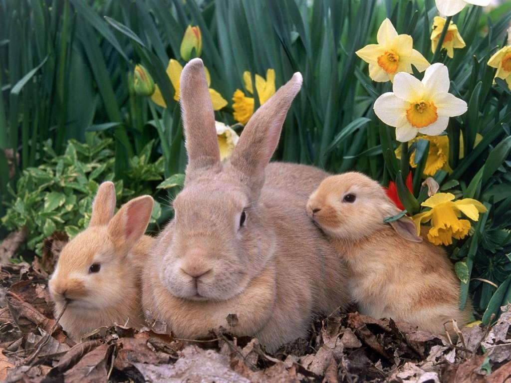 bunnywithbabies