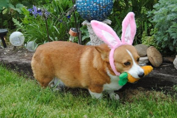 Easter Bunny Impersonators Cuteness Overflow