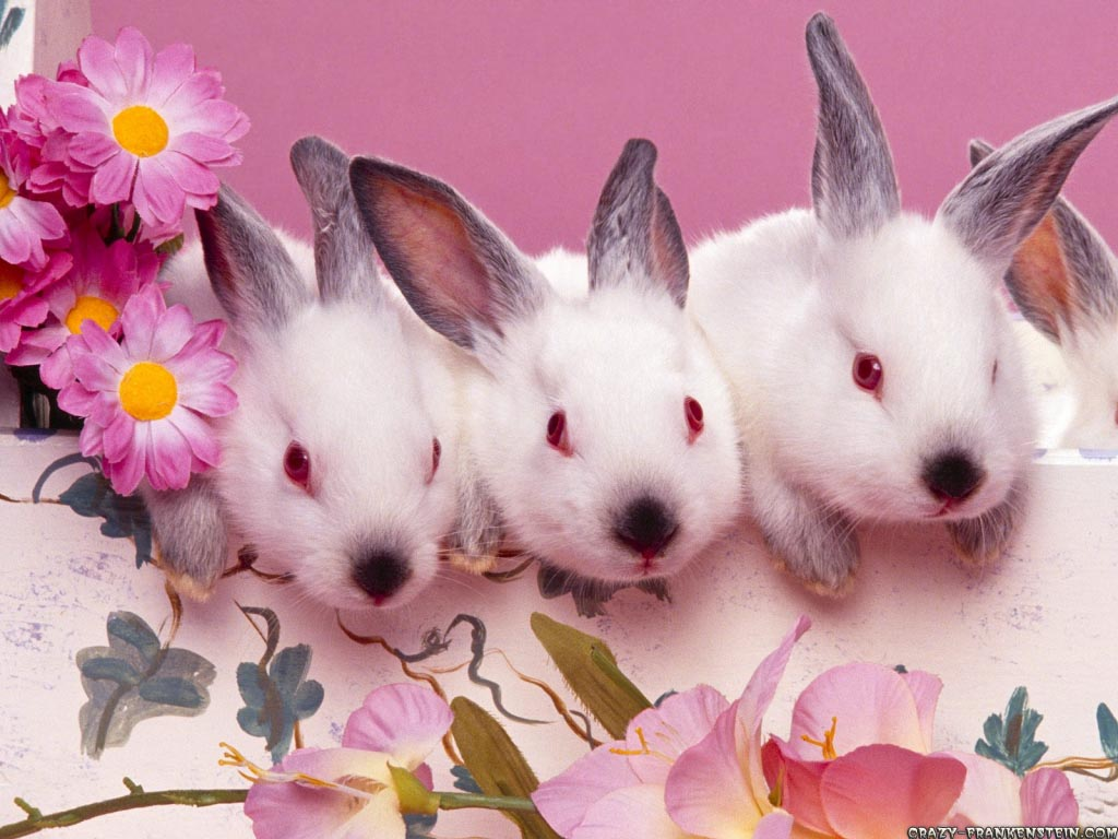 cute-bunnies-easter-wallpaper