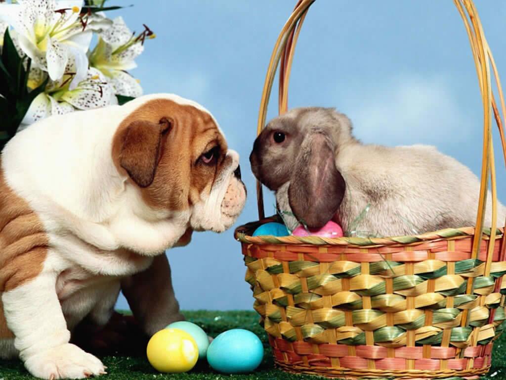 cute-easter-bunnies-szript2f
