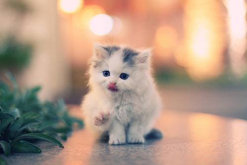 cute-kittens (1)