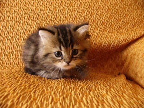 cute-kittens (10)