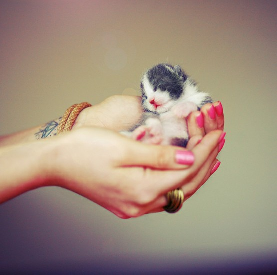 cute-kittens (11)