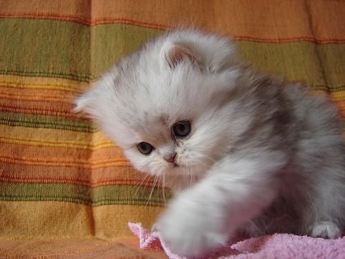 cute-kittens (12)