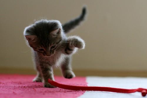 cute-kittens (13)