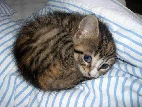 cute-kittens (14)