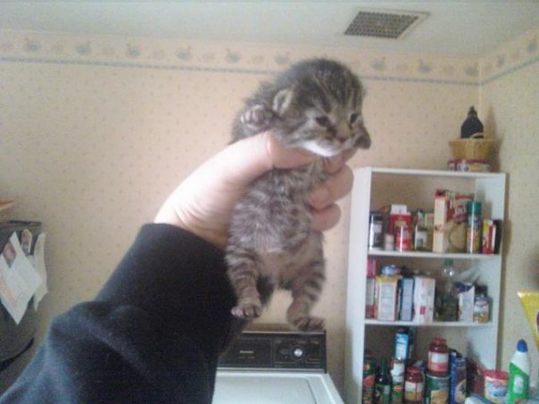 cute-kittens (16)