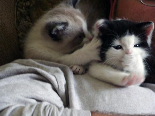 cute-kittens (17)