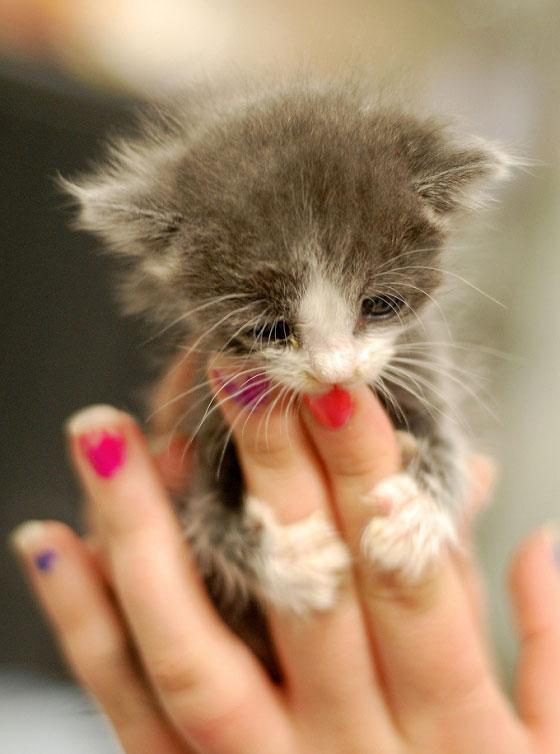 cute-kittens (18)