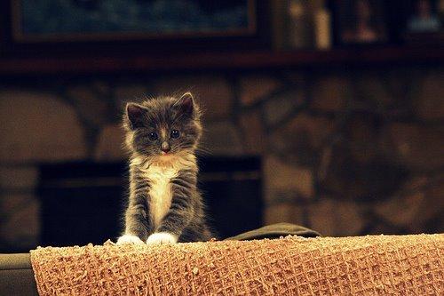 cute-kittens (2)