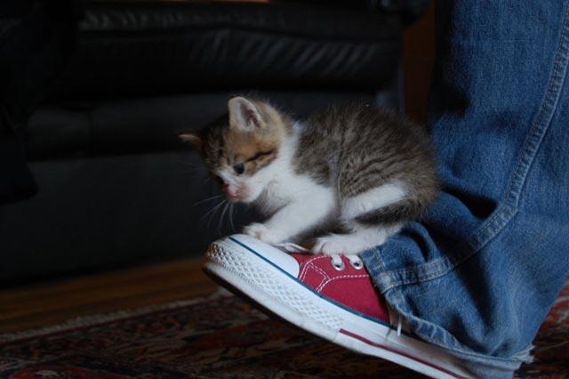 cute-kittens (3)