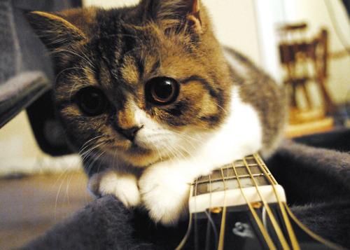 cute-kittens (4)