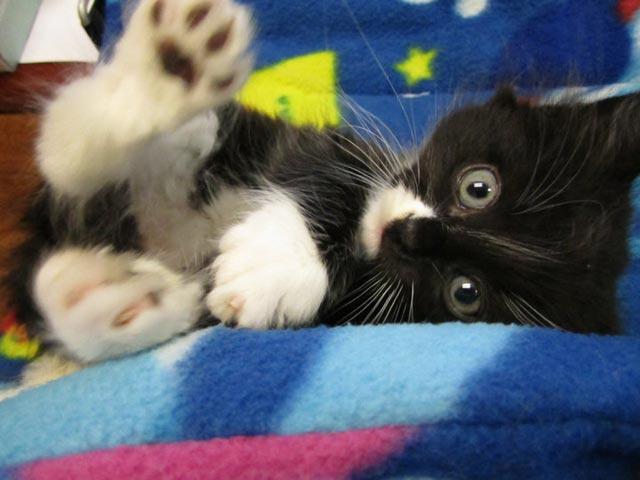 cute-kittens (6)