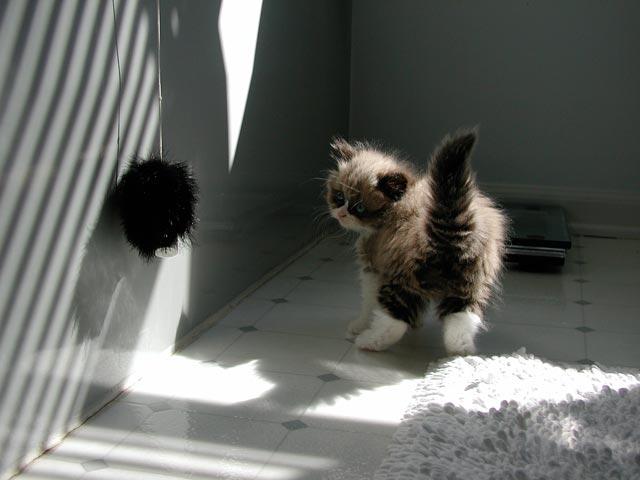 cute-kittens (7)