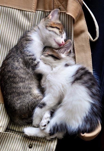 cute-kittens (8)