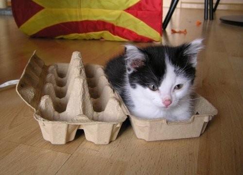 cute-kittens (9)