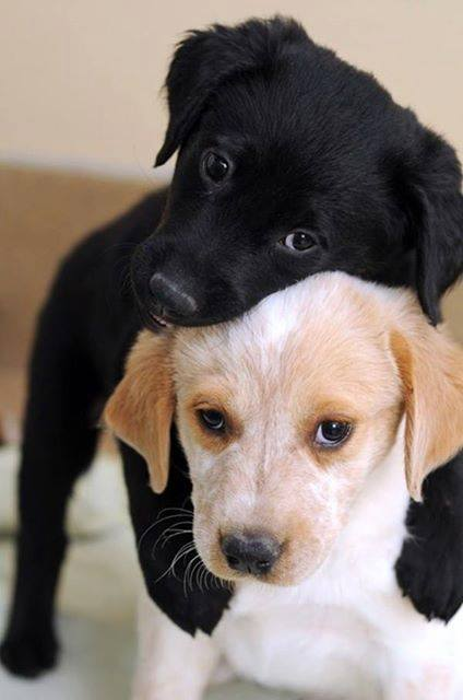 cute-puppies (1)