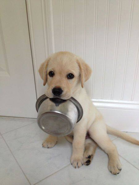 cute-puppies (12)