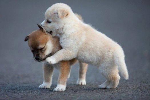 cute-puppies (13)