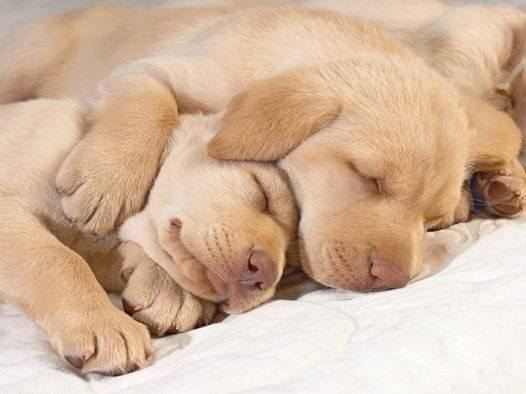 cute-puppies (15)
