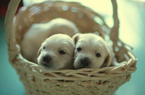 cute-puppies (17)