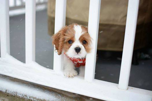 cute-puppies (18)