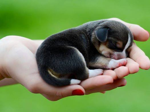 20 Cute Puppy Pictures | Cuteness Overflow
