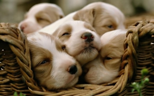cute-puppies (2)