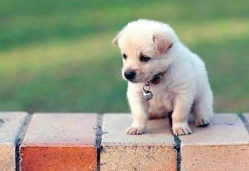 cute-puppies (20)