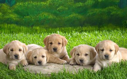 cute-puppies (3)