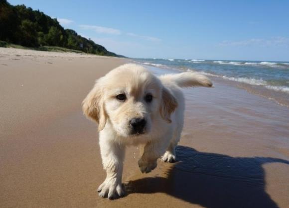 cute-puppies (4)