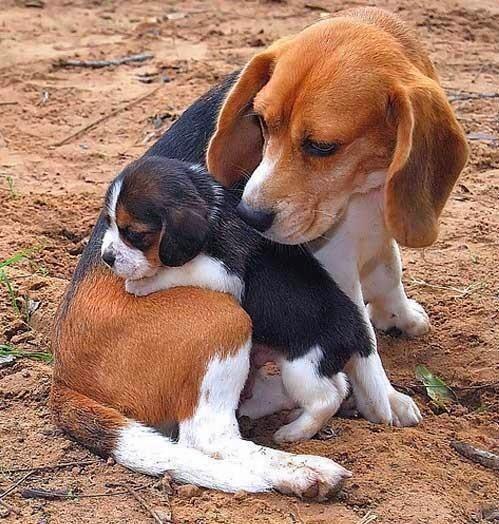 cute-puppies (5)