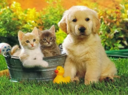 cute-puppies (6)