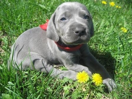 cute-puppies (7)