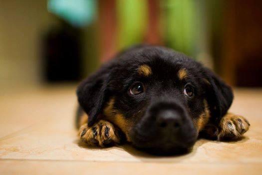 cute-puppies (9)