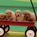 dogs-comercial