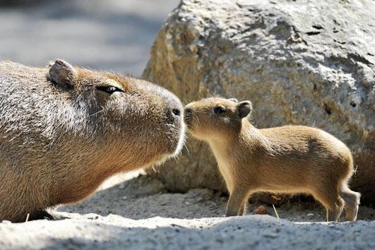 motherhood_animal_kingdom_12