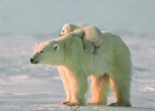 motherhood_animal_kingdom_13