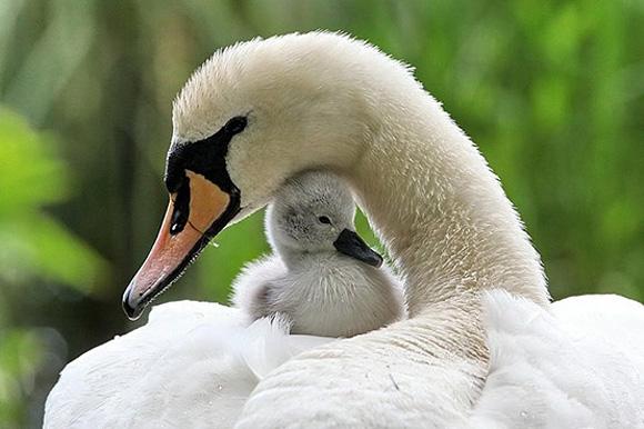 motherhood_animal_kingdom_14