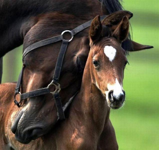 motherhood_animal_kingdom_18