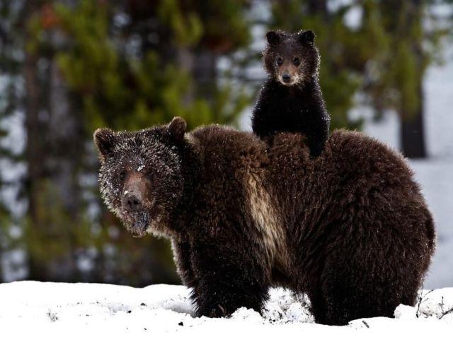 motherhood_animal_kingdom_20