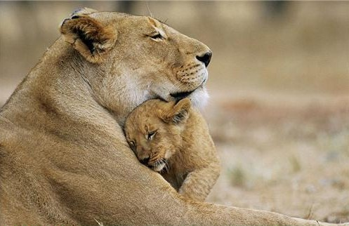 motherhood_animal_kingdom_21