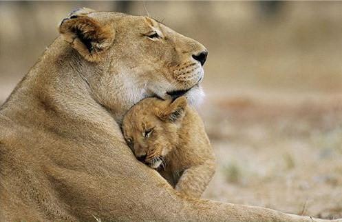motherhood_animal_kingdom_21