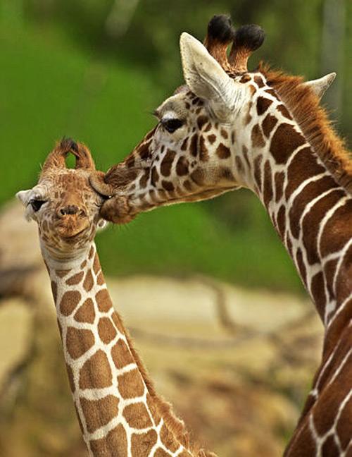 motherhood_in_animal_kingdom_10