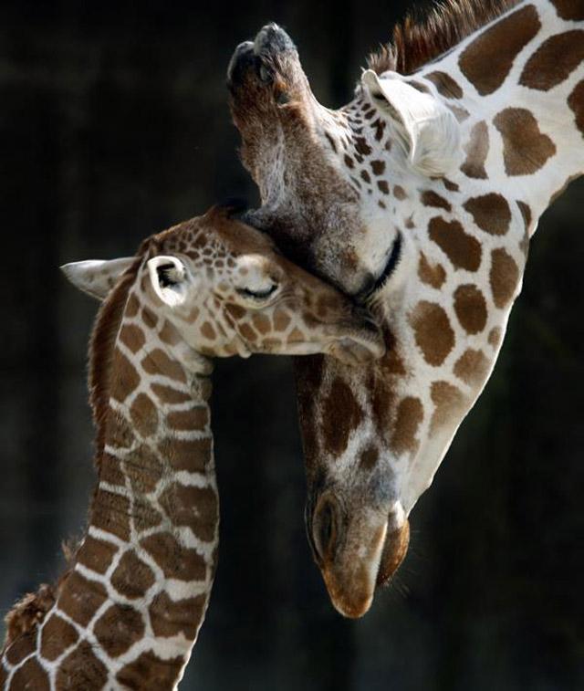motherhood_in_animal_kingdom_11