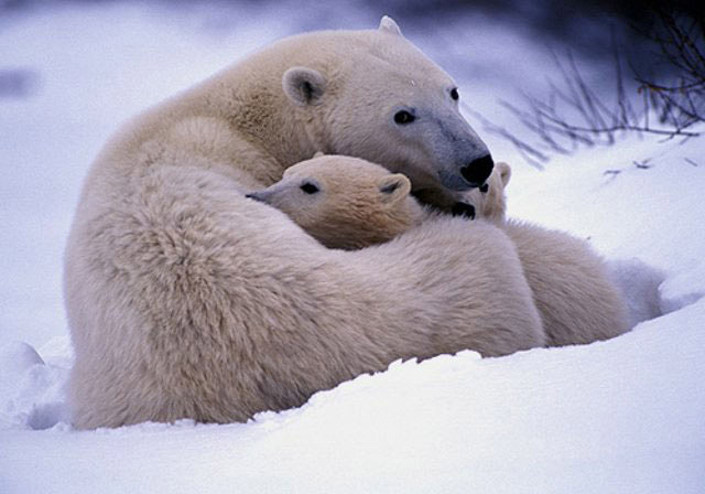 motherhood_in_animal_kingdom_18
