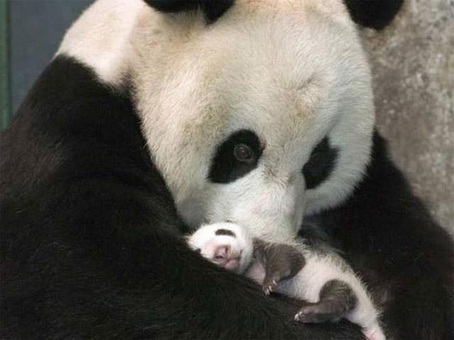 motherhood_in_animal_kingdom_3