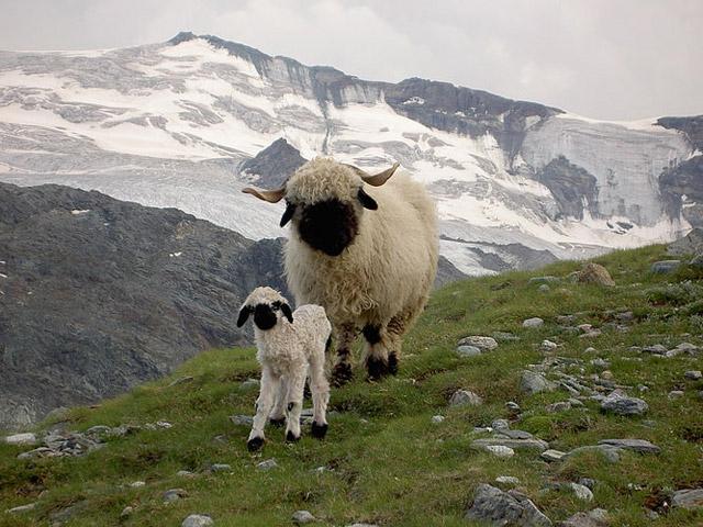 motherhood_in_animal_kingdom_6