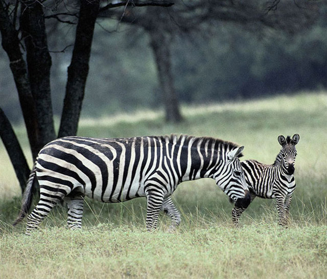 motherhood_in_animal_kingdom_7