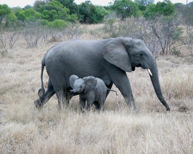 motherhood_in_animal_kingdom_8